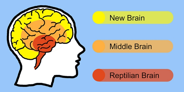 New Brain, Middle Brain, Reptilian Brain