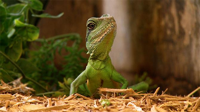 Rethinking Corporate Video - Lizard